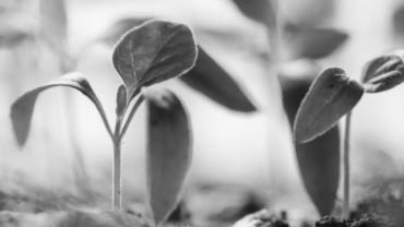 Why lead nurturing is vital to your success